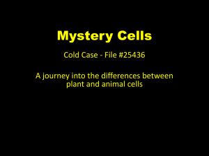 Mystery Cells day one and two