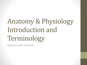 Anatomy & Physiology Introduction and Terminology