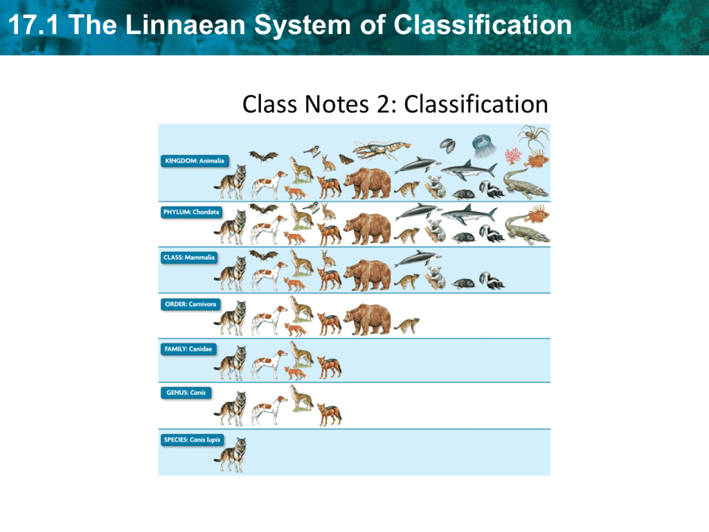 17.1 The Linnaean System of Classification