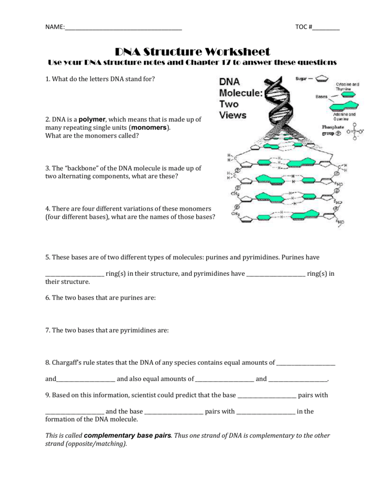 NAME: TOC #______ DNA Structure Worksheet Use your DNA