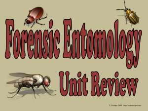 Forensic Entomology Review Key