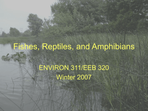Fish, Reptiles and Amphibians