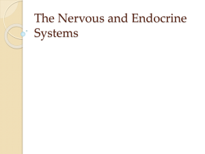 The Nervous and Endocrine Systems