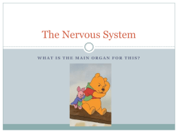 The Nervous System - Treynor Community Schools