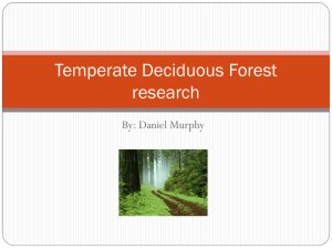 Temperate Deciduous Forest research - cooklowery14-15