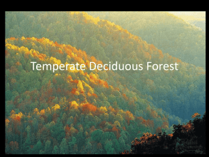 Five Zones of Temperate Forests