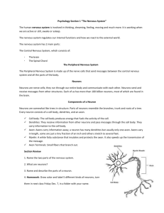 "Psychology Section 1 ""The Nervous System"" The human nervous"