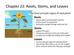 Quiz &amp- Worksheet - Roots &amp- Stems | Study.com