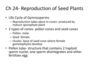 Ch 24- Reproduction of Seed Plants