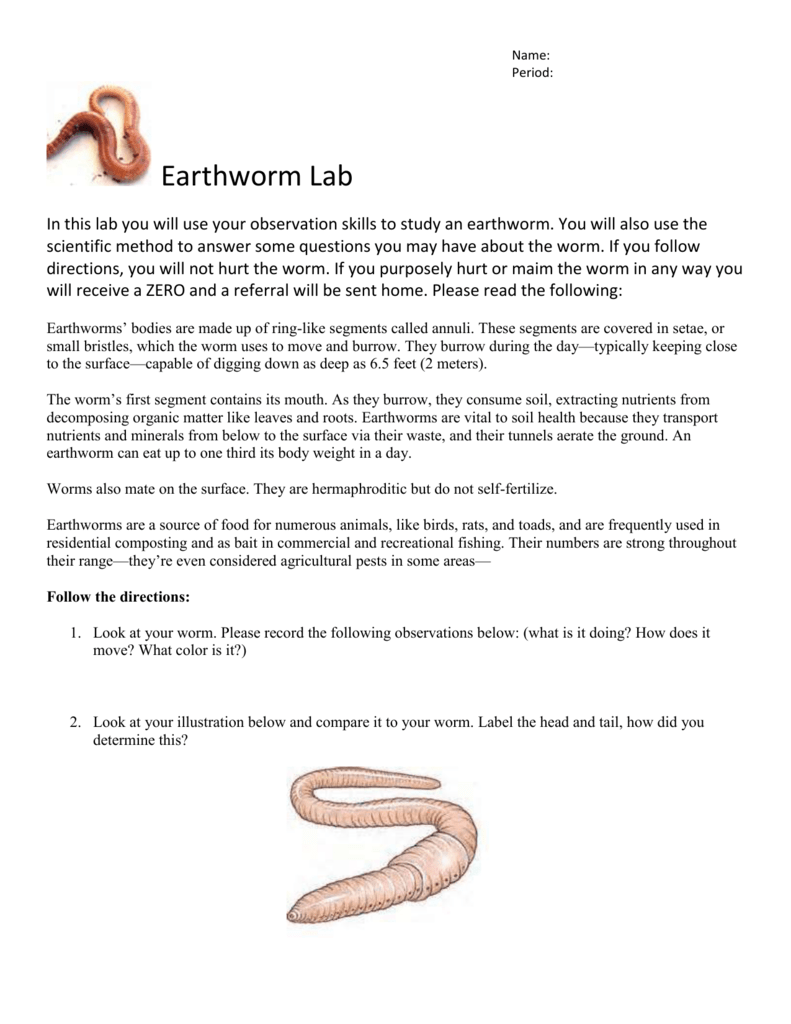 Earthworm Lab for scientific method – Earthworm Worksheet Answers