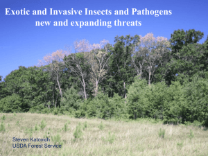 Exotic and Invasive Insects in Wisconsin*s Forests