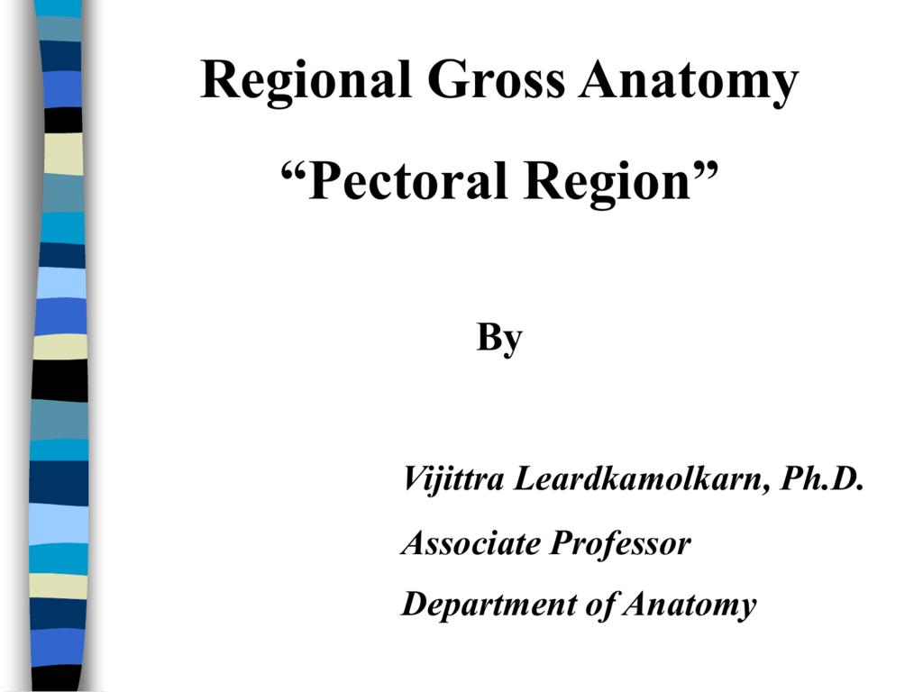 Regional Gross Anatomy Pectoral Region