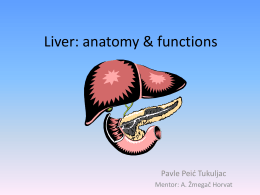 Liver: anatomy & functions