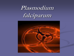 "Moriah Murrin- ""Plasmodium falciparum"