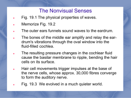 Module 19 The Nonvisual Senses