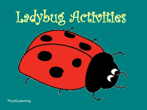 Ladybugs - Kids