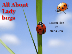 All About Ladybugs - Cal State LA