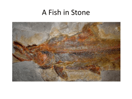 A Fish in Stone (powerpoint)