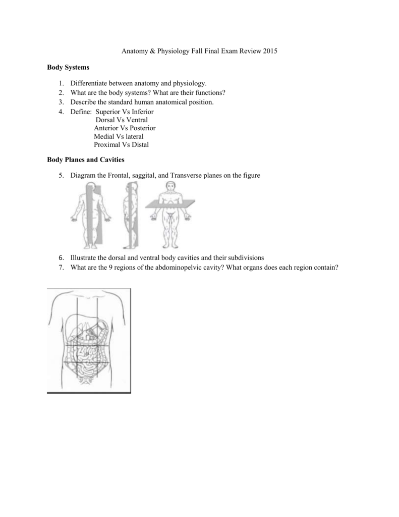 Anatomy Physiology Fall Final Exam Review 2015 Body Systems