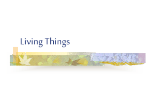Living Things - Primary Resources