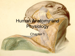 Human Anatomy and Physiologych12014newupdatefixed