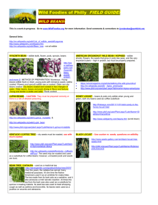 Bean 'Field Guide' w photos and links