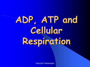 ADP, ATP and Cellular Respiration Powerpoint