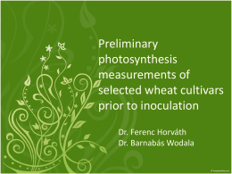 Preliminary photosynthesis measurements of selected wheat