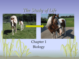 The Study of Life - Nicholas County Schools