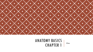Anatomy Basics Chapter 1