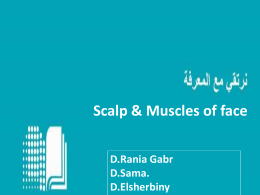 Scalp, Muscles of the face