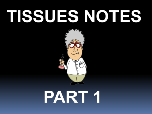 More Tissues Notes for Your Resources