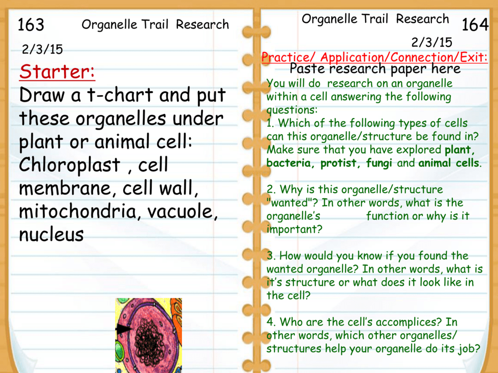 Organelle Trail Research And Poster Collection Animal Cell Vacuole Diagram Pictures Diagrams
