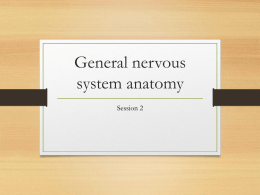 30 Answer Now - 34-602-Neuroanatomy-SP15
