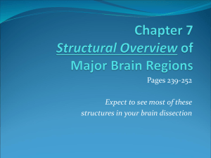 Chapter 7 Overview of Major Brain Regions