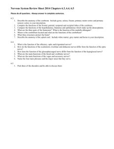Nervous System Review Sheet 2014 Chapters 6.3, 6.4, 6.5