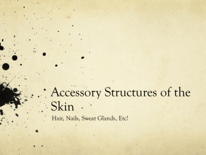 Accessory Structures of the Skin
