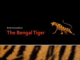 The Bengal Tiger - local.brookings.k12.sd.us