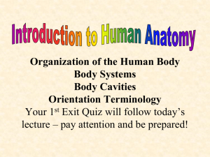 Organization of the Human Body - OG
