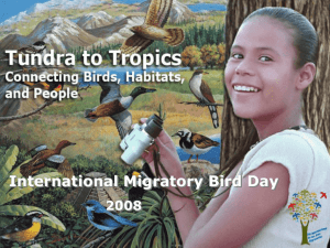 Tundra to Tropics Power Points - International Migratory Bird Day