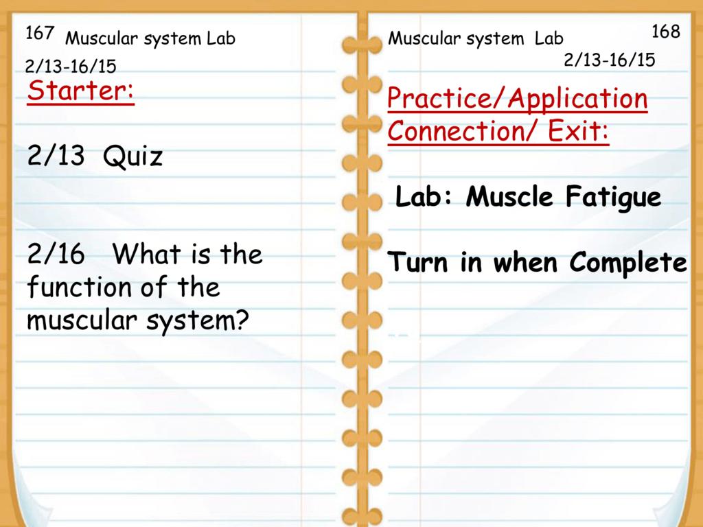 Muscular System Worksheet Lab