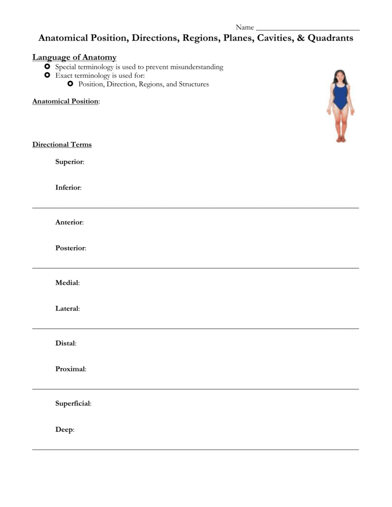 Worksheet Anatomical Position Worksheet Grass Fedjp