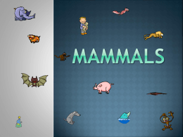 Mammals - Avon Community School Corporation