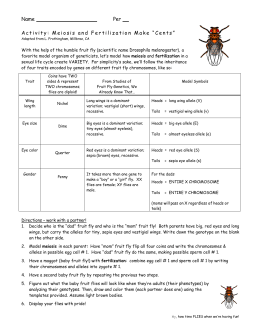 fruit fly behavior lab report