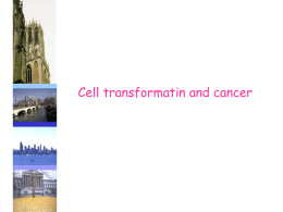 01A cell transformation