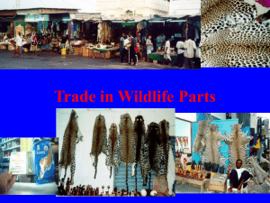 Trade in Wildlife Parts History