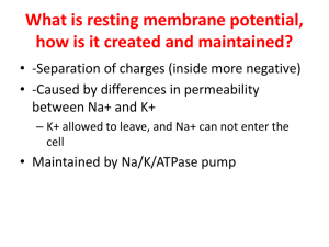 What is resting membrane potential, how is it