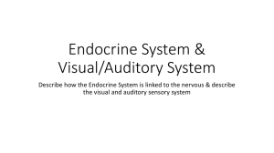 Endocrine System & Visual/Auditory System