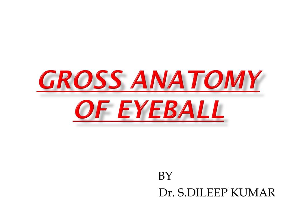 Gross Anatomy Of Eyeball