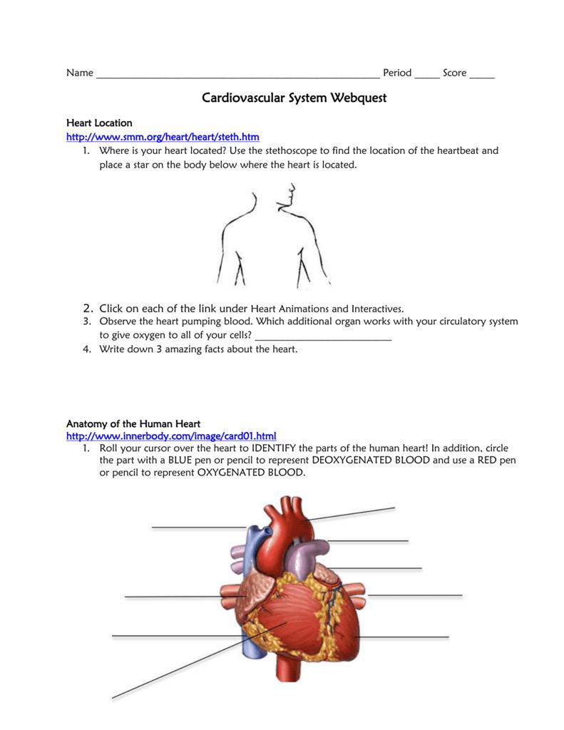 Cardiovascular System Webquest Bremen High School District 228